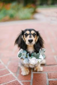A beautiful Jane Dog Collar by wedding florist, Something Borrowed Blooms, located near Lafayette, Louisiana.